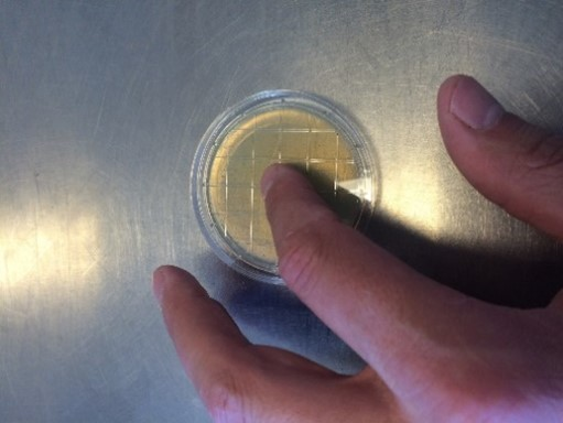 prøvetaking kontaktskål hygiene